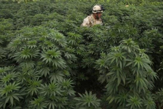 Marihuana ilegal: una decisión que no da risa