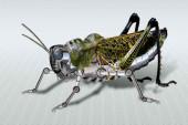 Impresionante nano tecnología Israelí, el grillo robótico