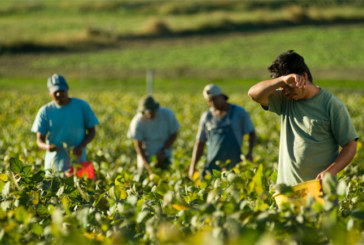 US Labor Department announces $81 million in available funds to support migrant, seasonal farmworkers