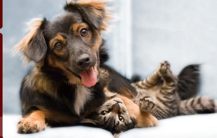 Animalcare
